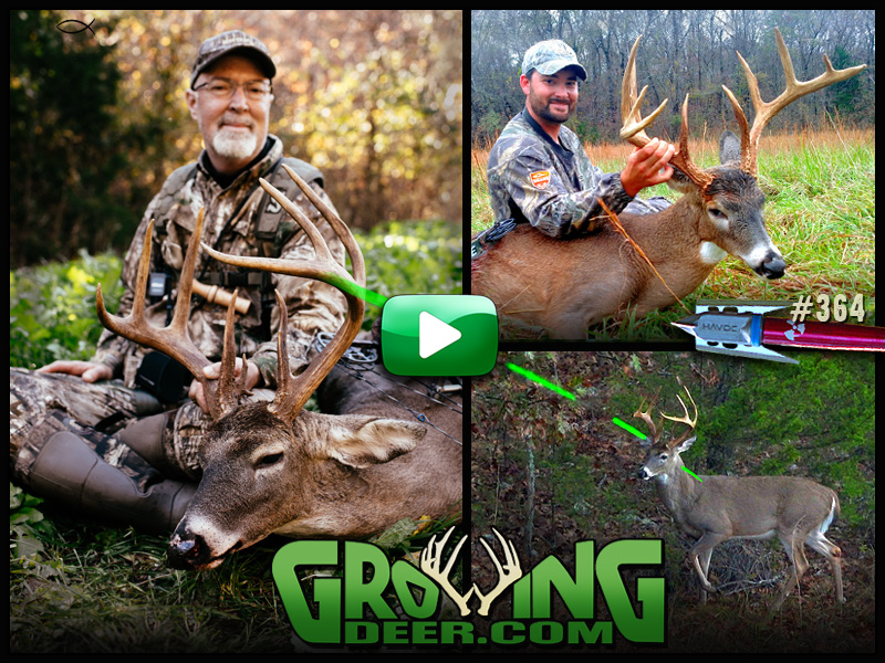 Watch GrowingDeer episode 364 as two Ozark deer are tagged during bow season.