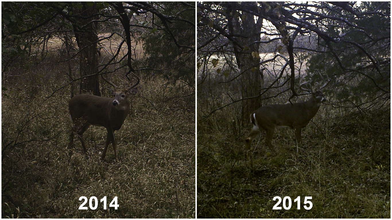 Big 8 trail camera picture comparing 2014 and 2015