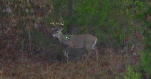 Arrow shot on a good buck.