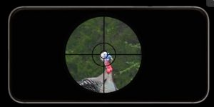 Turkey in the crosshairs of a scope.