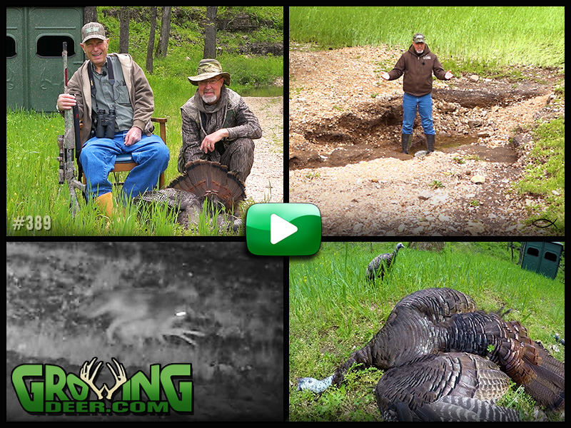Watch Pops Woods tags a gobbler and tips for food plot success in GrowingDeer episode #389.