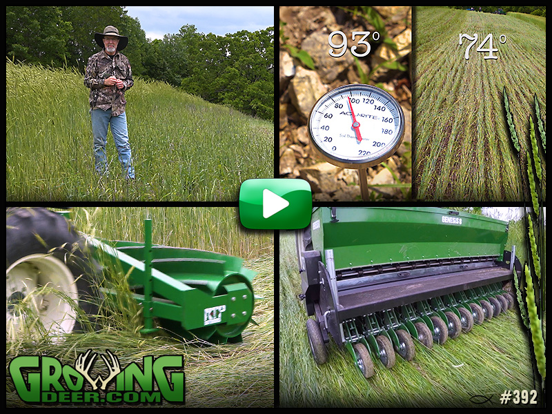 Learn tips for food plot success in GrowingDeer episode 392.