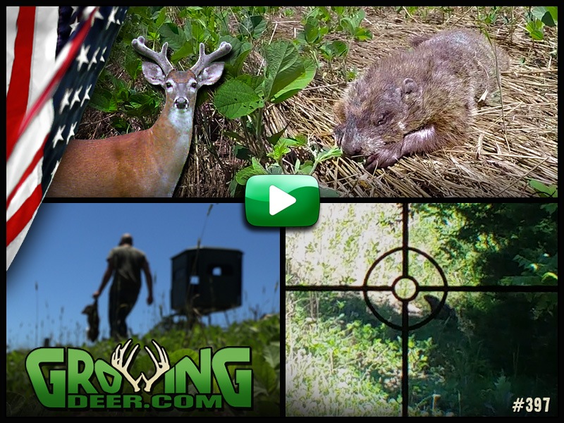 Protecting food plots for deer in GrowingDeer episode 397.