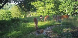 Several deer at a Trophy Rock station during daylight.