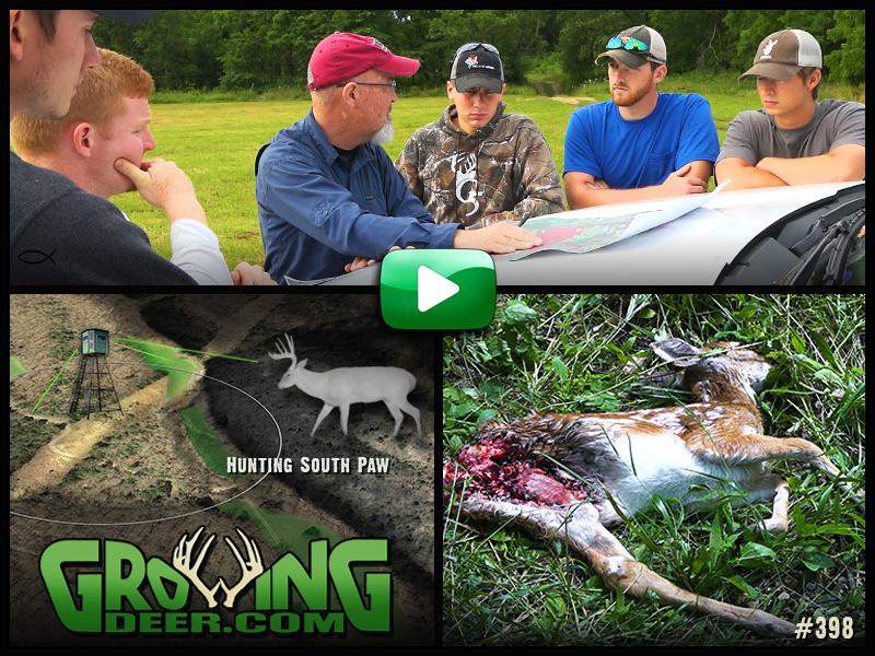A dead doe that was eaten by predators