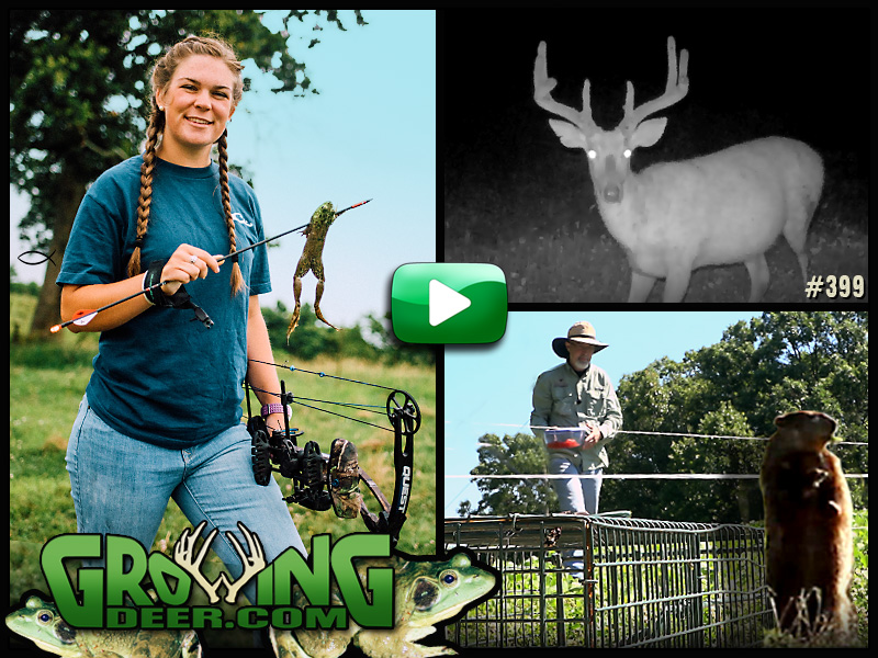 Food plot decisions and frog hunting in GrowingDeer episode #399.