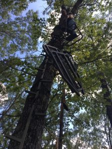 A hunter setting up a tree stand.
