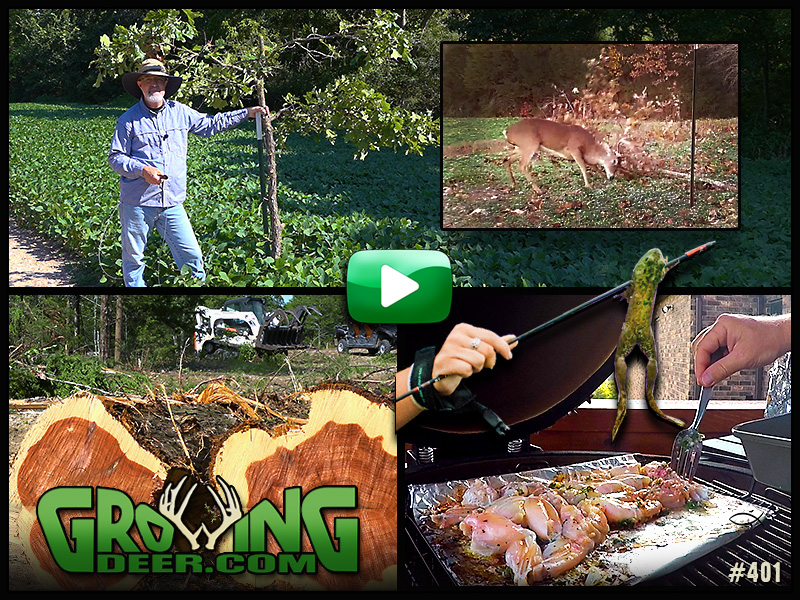 Learn how to convert pasture and create mock scrapes in GrowingDeer episode 401.