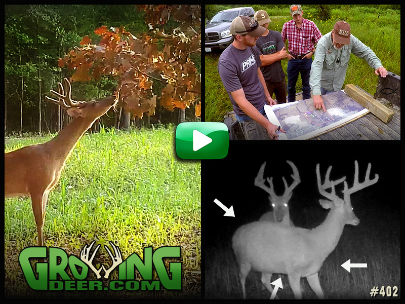 Learn how to age bucks and habitat management tips in GrowingDeer episode 402.
