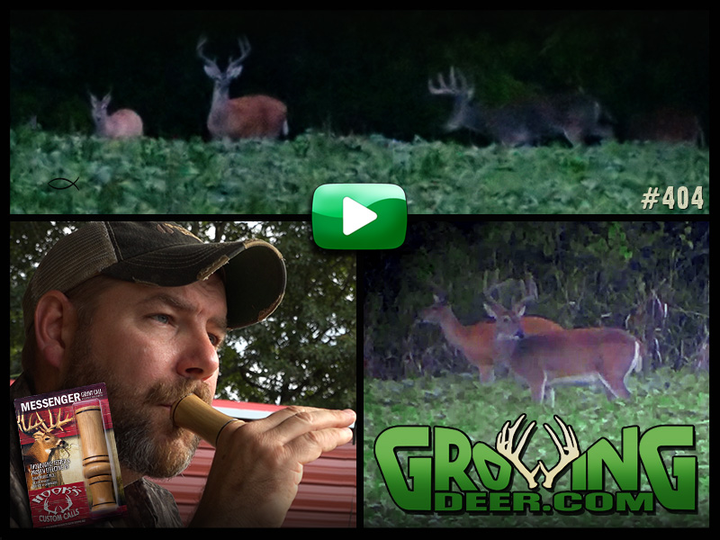 Bucks in velvet and James Harrison using a grunt call