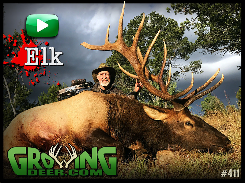 Watch a thrilling elk hunt in GrowingDeer episode 411.