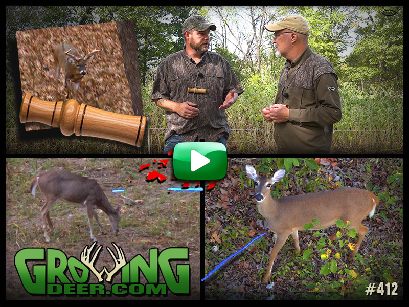 Watch four deer get tagged and learn how to use a grunt call in GrowingDeer episode 412.