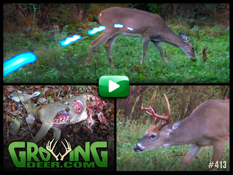 Watch episode 413 on growingdeer.com.