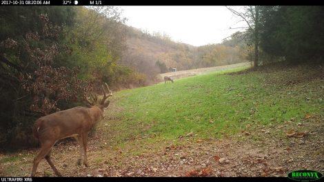 Southpaw a 6 yr old buck