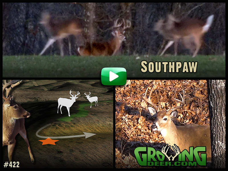 Learn our hunting strategies in GrowingDeer episode #422!