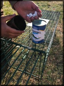 Baiting a trap with marshmallows