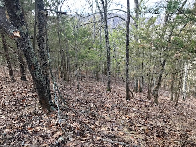 wooded scene with several buck rubs in view
