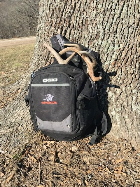 white-tailed buck antlers in backpack