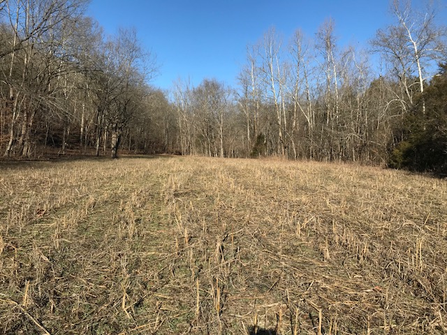 food plot with heavily browsed stubble