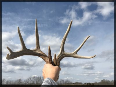 Shed antlers being held up against a blue sky.