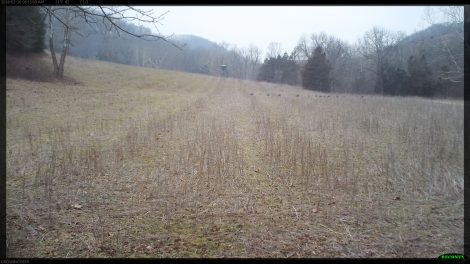 A time lapse picture of wild turkeys in a field