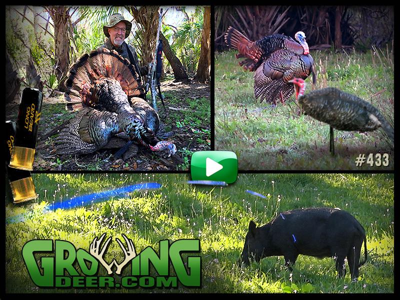 Watch a Florida turkey hunt in GrowingDeer episode 433.
