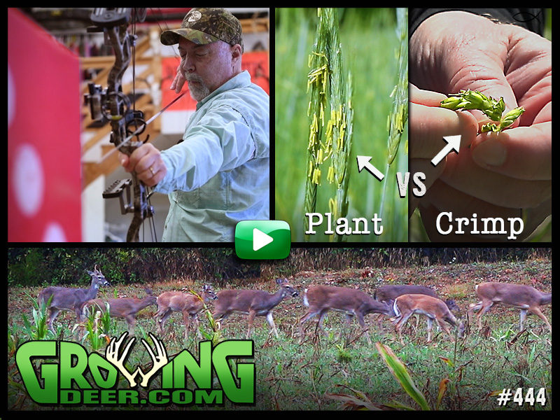 bow shooting practice, deer, plant, crimp: collage image of topics in GrowingDeer episode 444