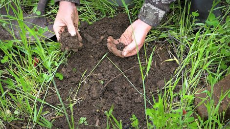 shovel of dirt reveals earthworms in soil