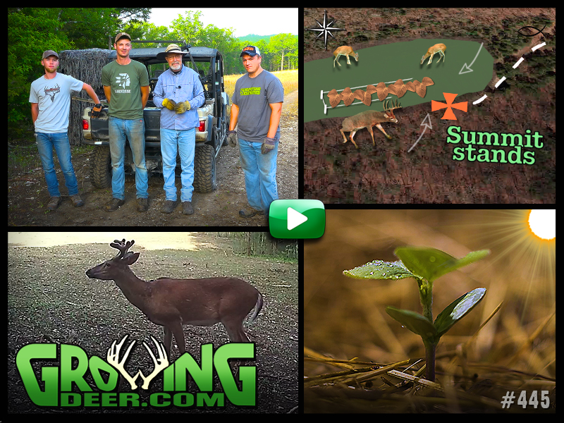 Deer hunting strategies and food plot tips images from episode #445