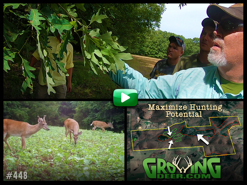 Improving habitat and creating hunting opportunities in GrowingDeer episode 448.