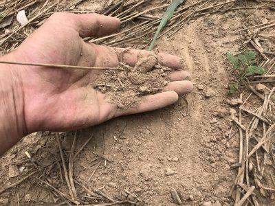 Hand of dry soil