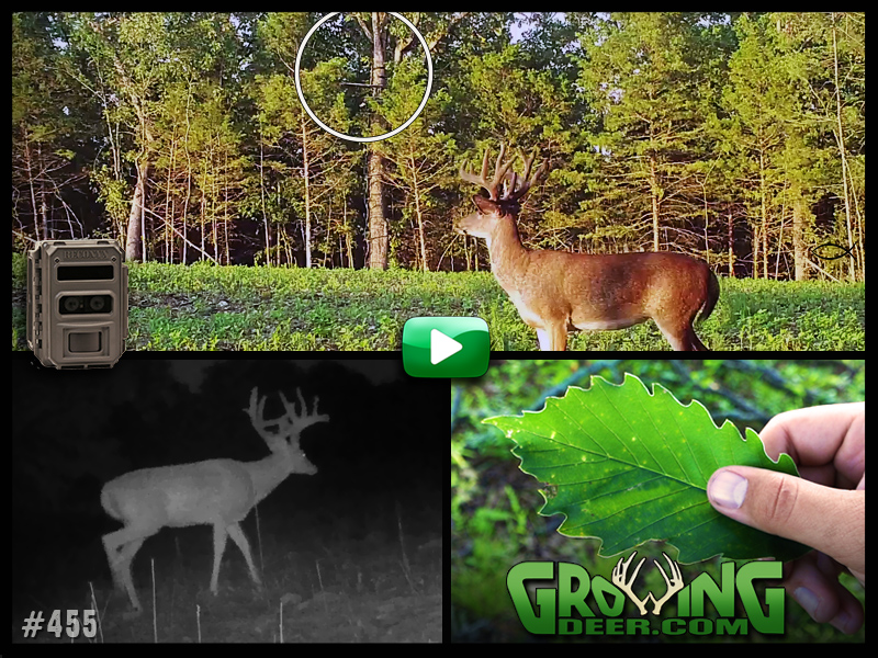 Planning for deer season in GrowingDeer episode #455