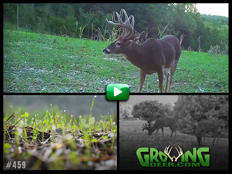 Learn how to have great food plots in GrowingDeer episode 459