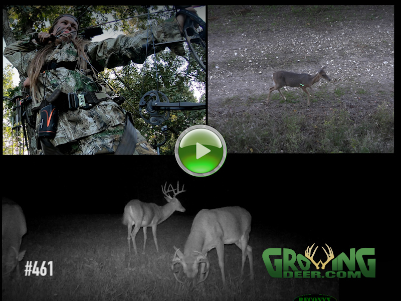 Bow Hunt Raleigh at full draw bucks doe
