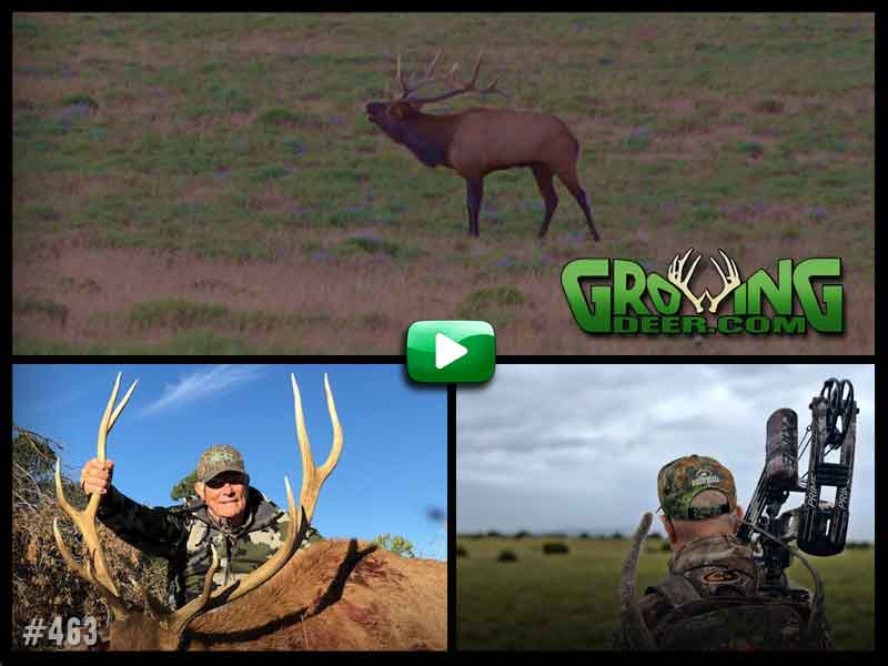 Chasing elk in GrowingDeer episode 463