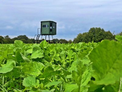 A Redneck hunting blind overlooking a food plot