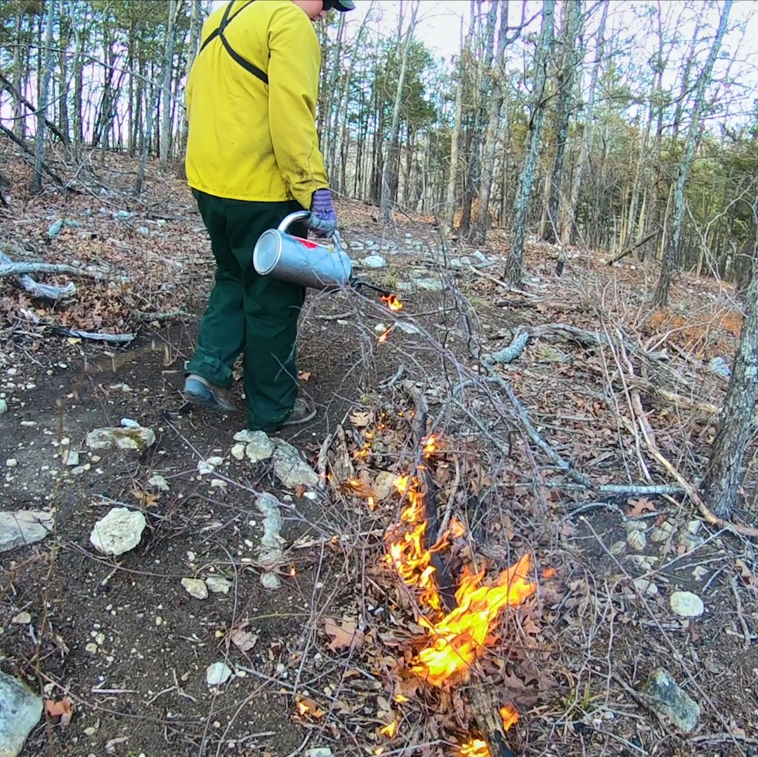 Drip torch dropping fire for a prescribed fire