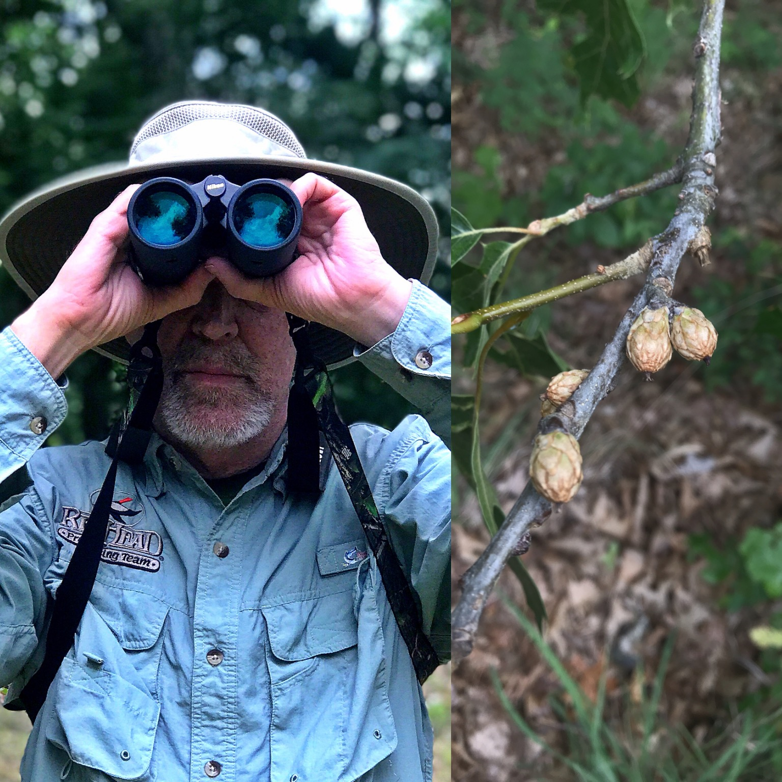 Grant scouting for acorns with Nikon binoculars