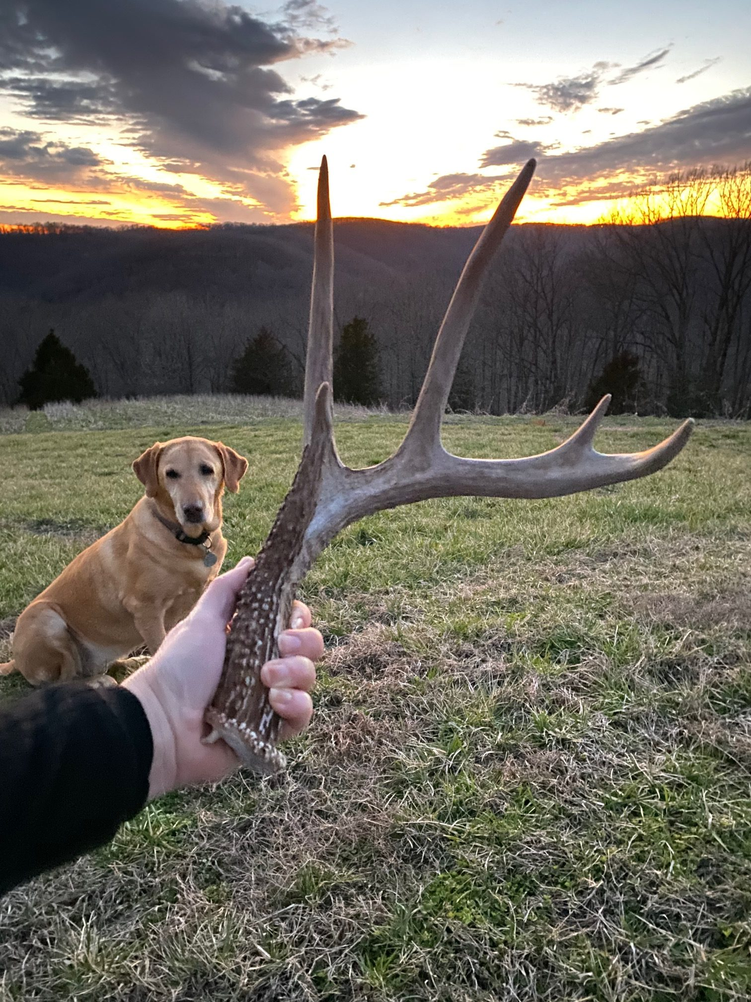 An antler found on a trail near sunset
