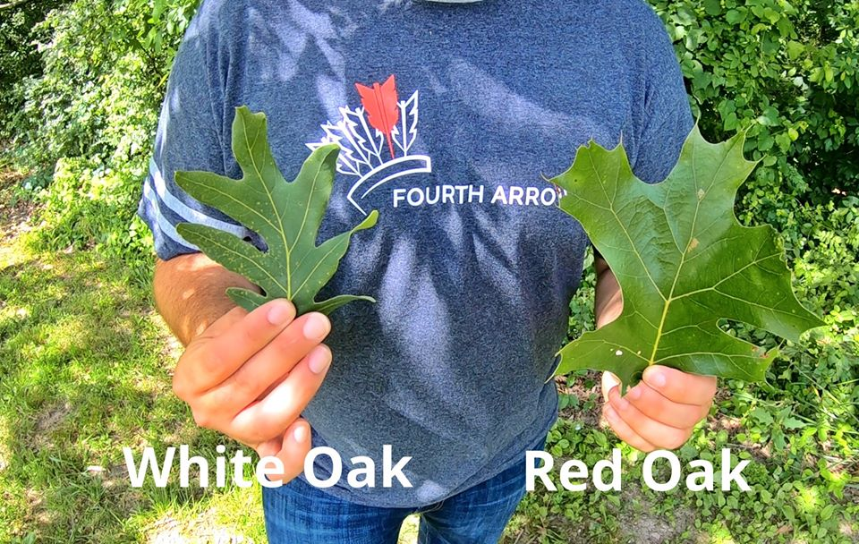 White Oak and Read Oak Leafs