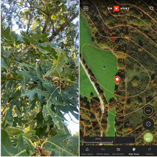Acorns producing trees marked on OnX