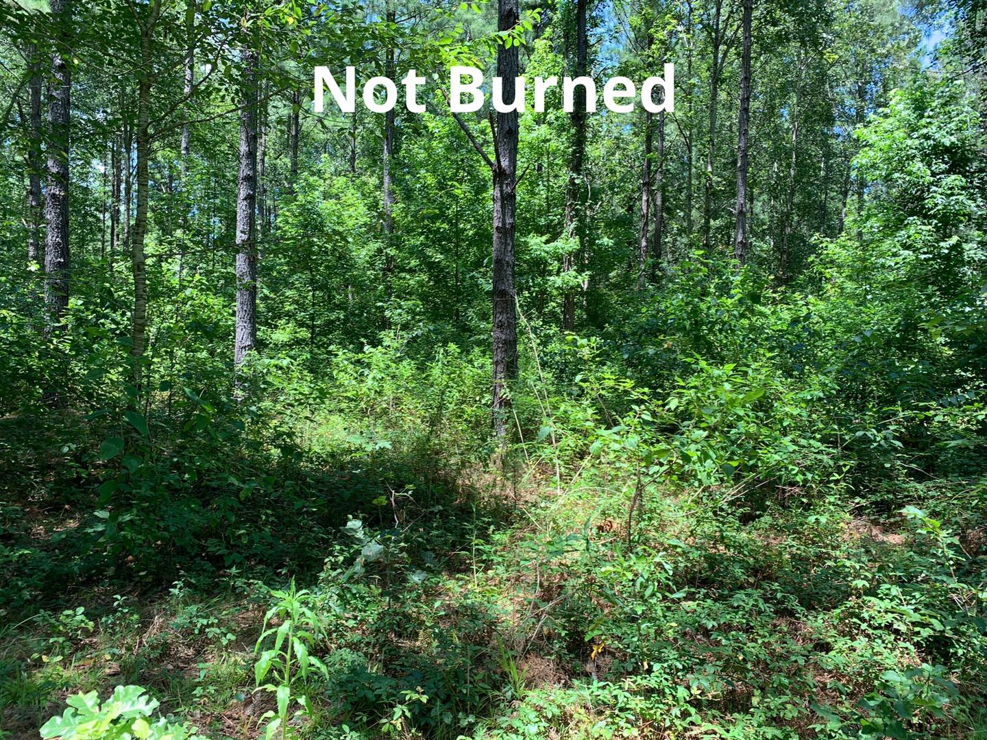 area that wasn't burned