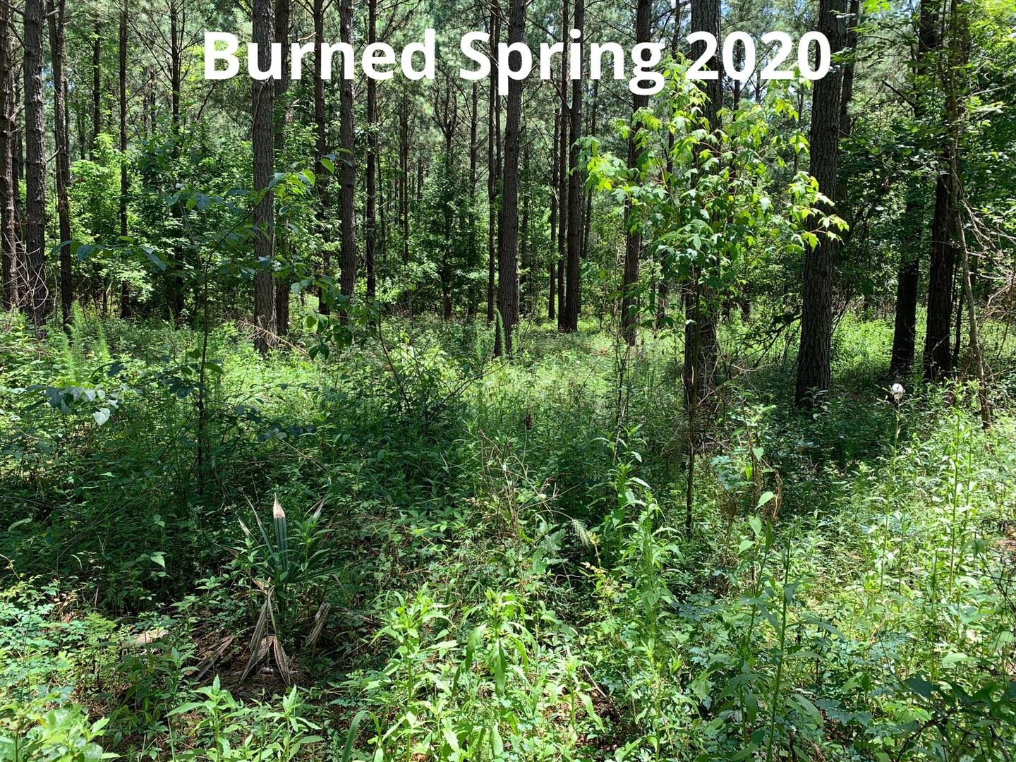 After Prescribed Fire