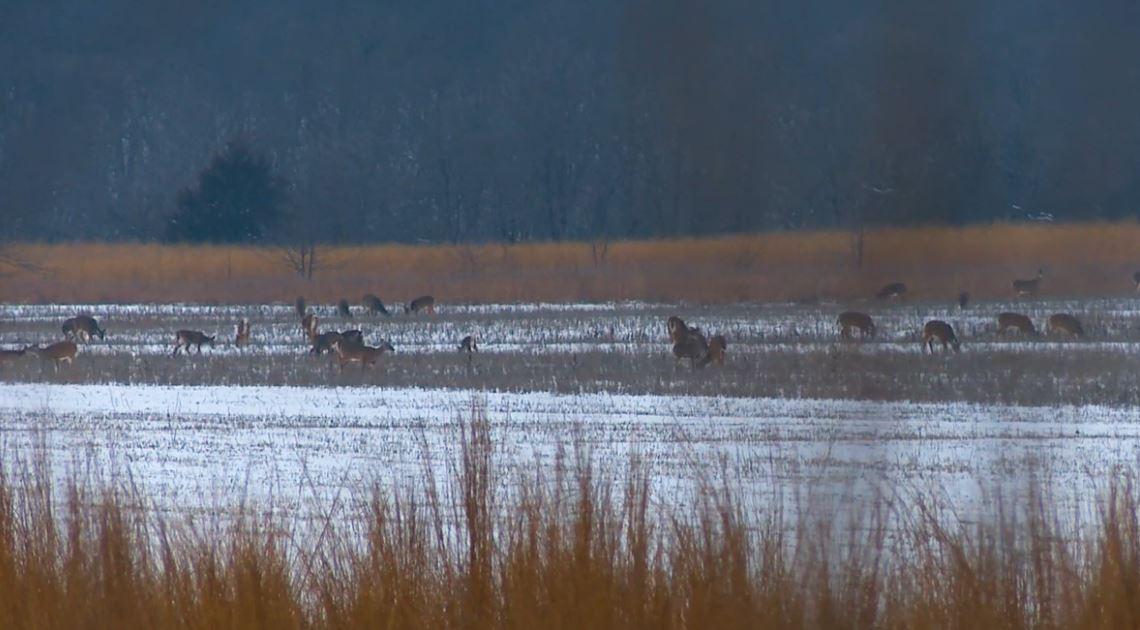 deer in snow covered field